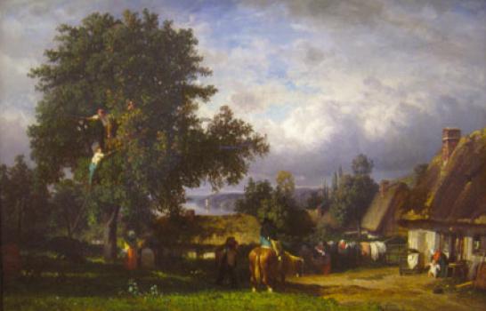 Урожай яблок в Нормандии