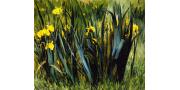 Джон Лесли Брек: картины художника с фото и описаниями
